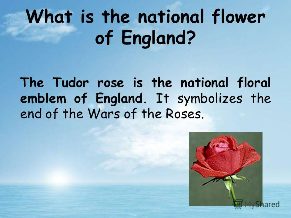 The Tudor rose is the national floral emblem of England. It symbolizes the end of the Wars of the Roses. What is the national flower of England?