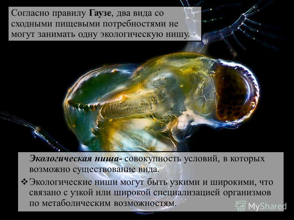 Экологическая ниша- совокупность условий, в которых возможно существование вида. Экологические ниши могут быть узкими и широкими, что связано с узкой или широкой специализацией организмов по метаболическим возможностям. Согласно правилу Гаузе, два ви