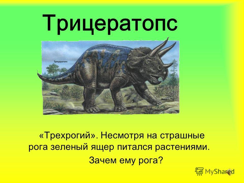 Трицератопс «Трехрогий». Несмотря на страшные рога зеленый ящер питался растениями. Зачем ему рога?