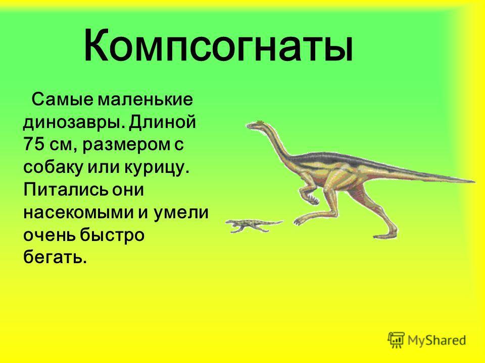 Компсогнаты Самые маленькие динозавры. Длиной 75 см, размером с собаку или курицу. Питались они насекомыми и умели очень быстро бегать.