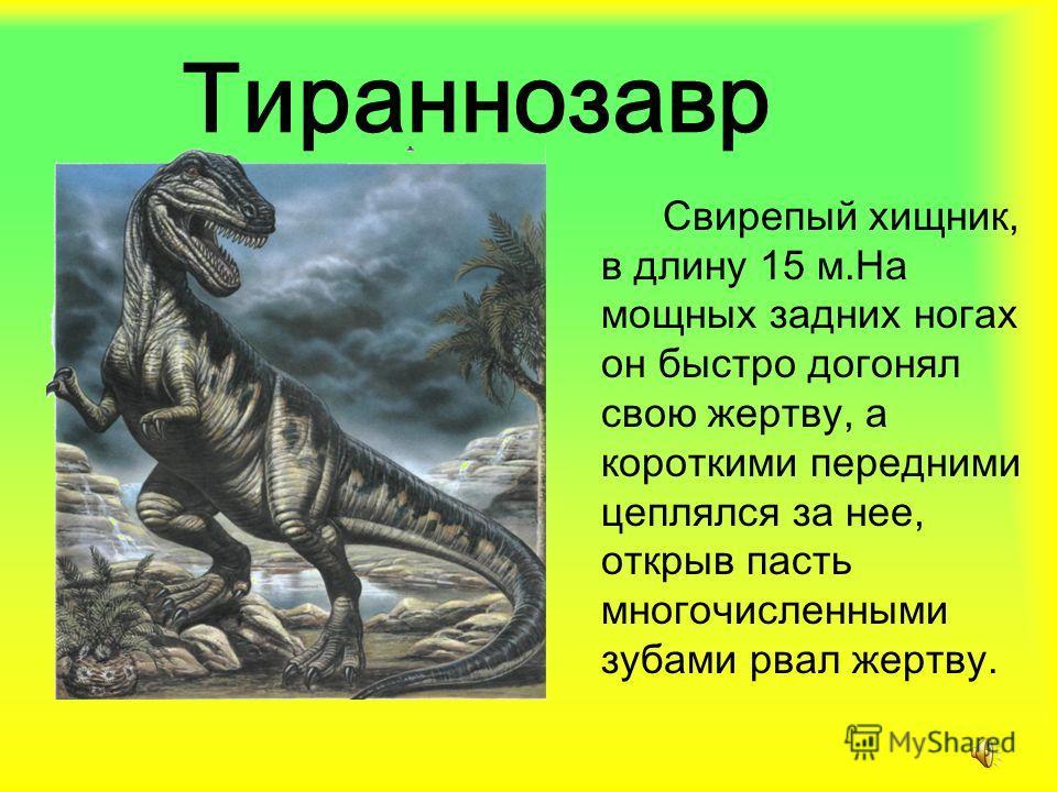 Тираннозавр Свирепый хищник, в длину 15 м.На мощных задних ногах он быстро догонял свою жертву, а короткими передними цеплялся за нее, открыв пасть многочисленными зубами рвал жертву.