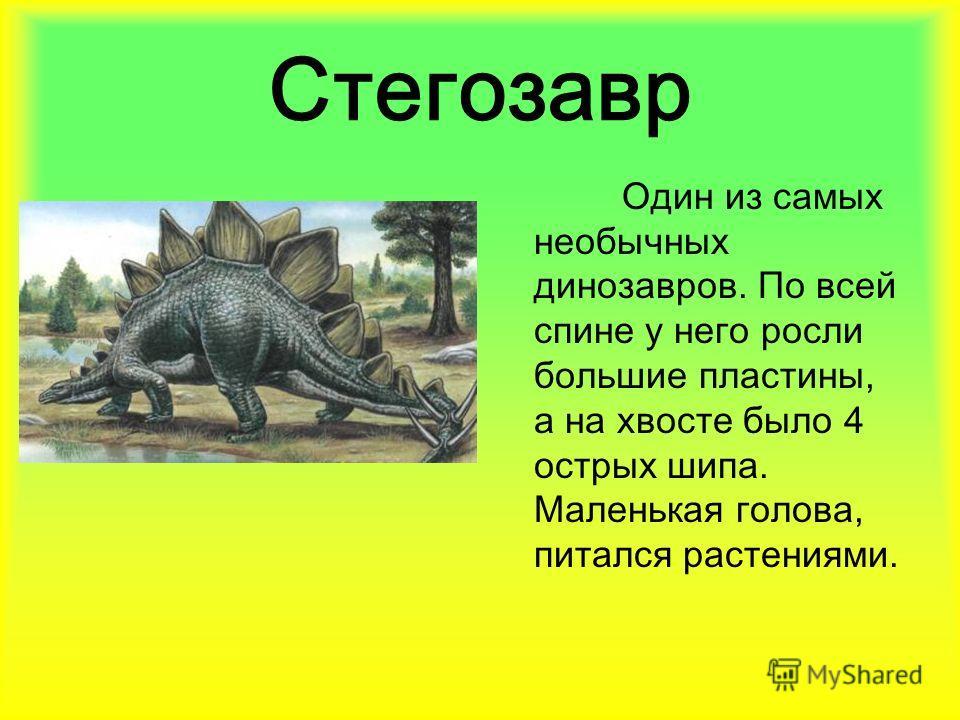 Стегозавр Один из самых необычных динозавров. По всей спине у него росли большие пластины, а на хвосте было 4 острых шипа. Маленькая голова, питался растениями.