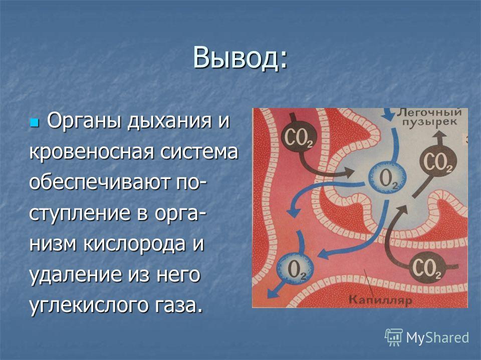 Вывод: Органы дыхания и Органы дыхания и кровеносная система обеспечивают по- ступление в орга- низм кислорода и удаление из него углекислого газа.