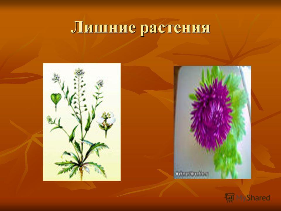 Лишние растения