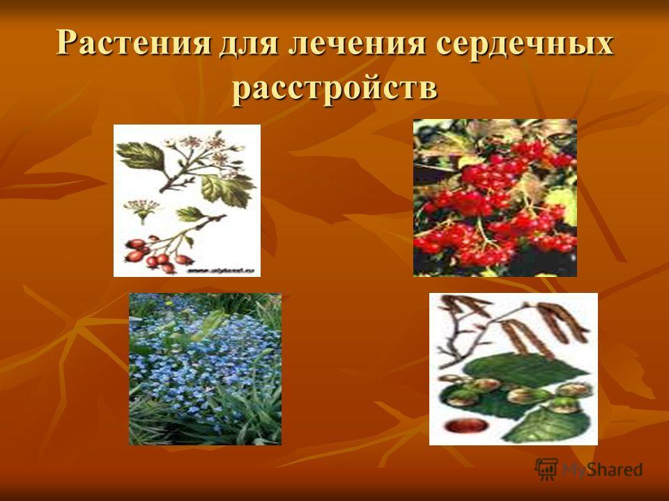 Растения для лечения сердечных расстройств
