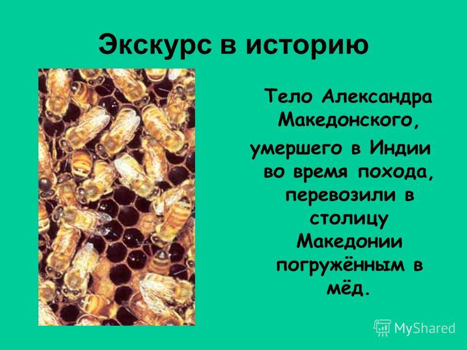Экскурс в историю Тело Александра Македонского, умершего в Индии во время похода, перевозили в столицу Македонии погружённым в мёд.