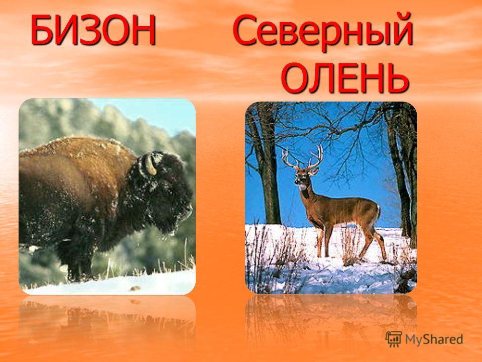 ПОЯВЛЯЮТСЯ новые виды животных: Шерстистый носорог