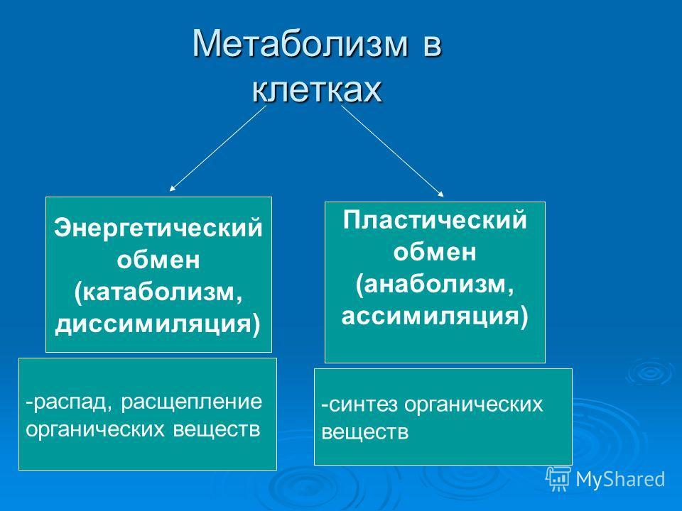 Метаболизм в клетках Энергетический обмен (катаболизм, диссимиляция) Пластический обмен (анаболизм, ассимиляция) -распад, расщепление органических веществ -синтез органических веществ