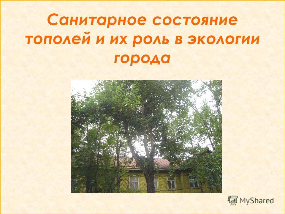 Санитарное состояние тополей и их роль в экологии города