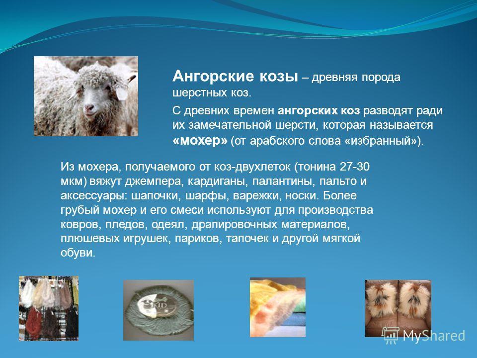 Ангорские козы – древняя порода шерстных коз. С древних времен ангорских коз разводят ради их замечательной шерсти, которая называется «мохер» (от арабского слова «избранный»). Из мохера, получаемого от коз-двухлеток (тонина 27-30 мкм) вяжут джемпера