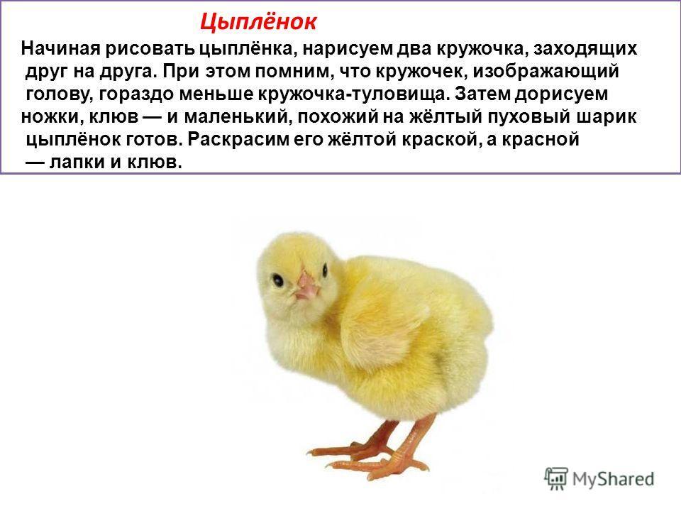 Цыплёнок Начиная рисовать цыплёнка, нарисуем два кружочка, заходящих друг на друга. При этом помним, что кружочек, изображающий голову, гораздо меньше кружочка-туловища. Затем дорисуем ножки, клюв и маленький, похожий на жёлтый пуховый шарик цыплёнок