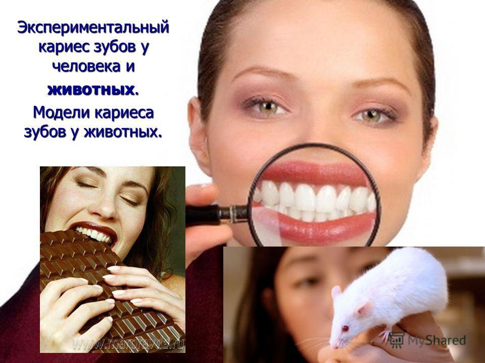 Экспериментальный кариес зубов у человека и животных. Модели кариеса зубов у животных.