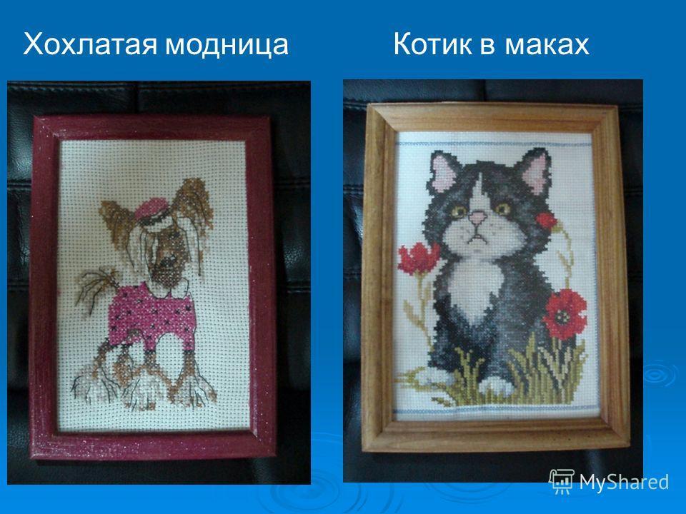 Котик в макахХохлатая модница