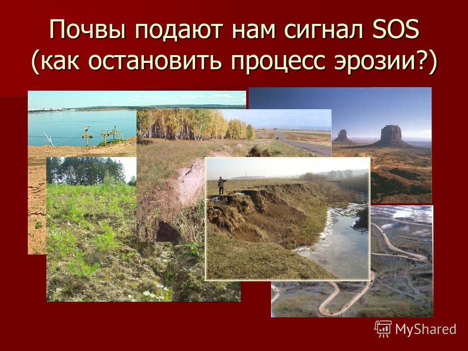 Почвы подают нам сигнал SOS (как остановить процесс эрозии?)
