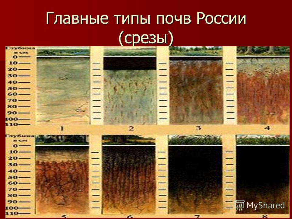 Главные типы почв России (срезы)