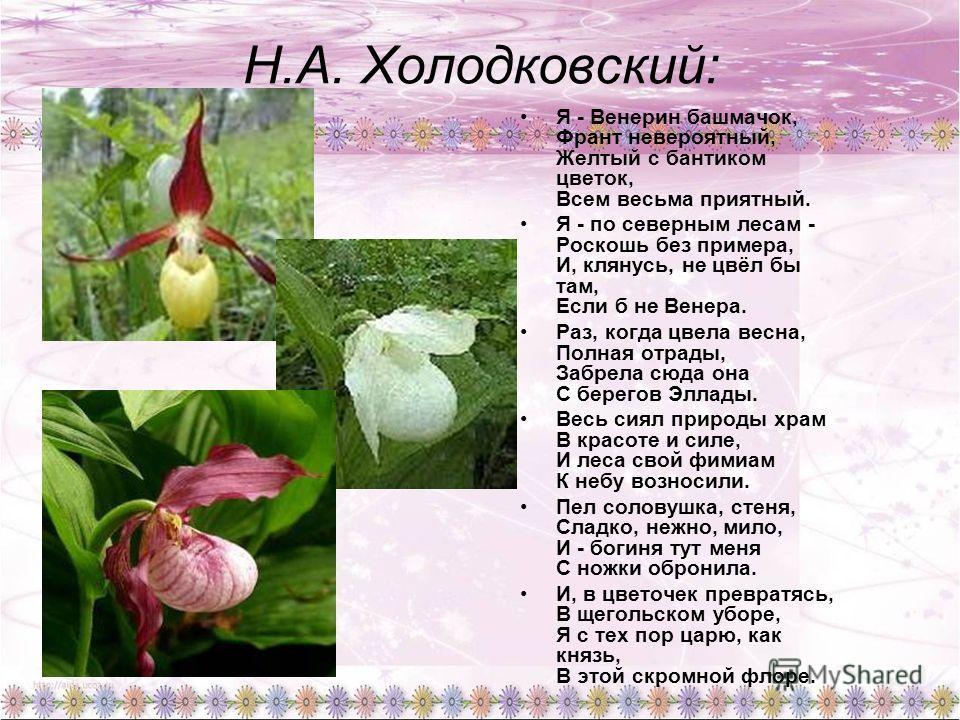 Н.А. Холодковский: Я - Венерин башмачок, Франт невероятный, Желтый с бантиком цветок, Всем весьма приятный. Я - по северным лесам - Роскошь без примера, И, клянусь, не цвёл бы там, Если б не Венера. Раз, когда цвела весна, Полная отрады, Забрела сюда
