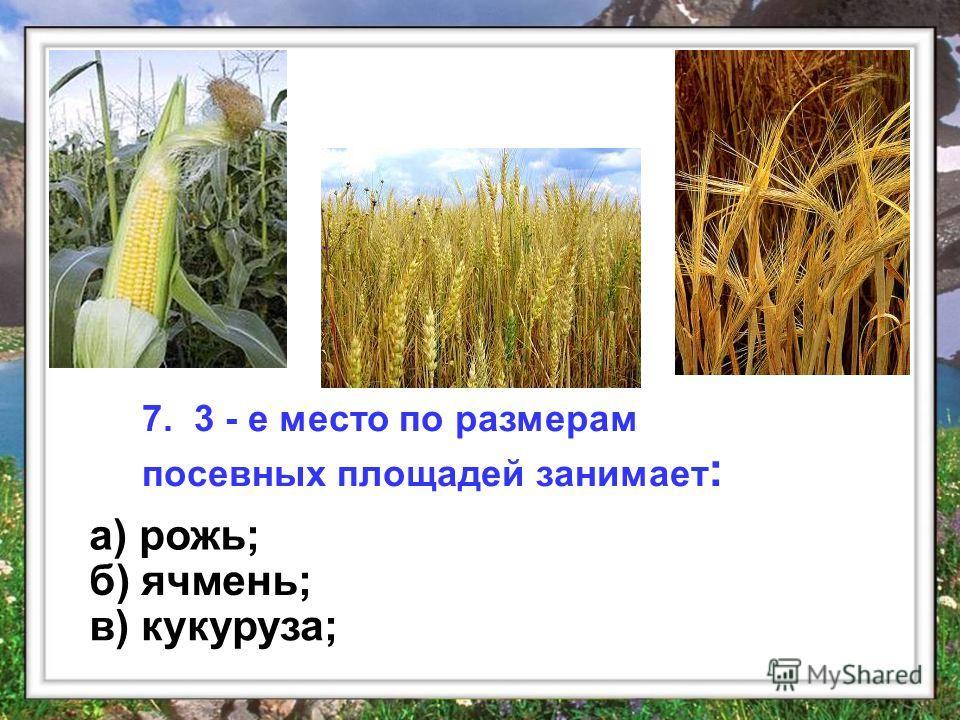 7. 3 - е место по размерам посевных площадей занимает : а) рожь; б) ячмень; в) кукуруза;