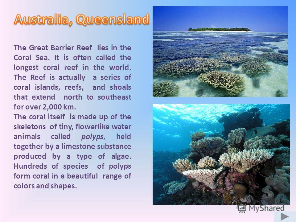 The Great Barrier Reef lies in the Coral Sea. It is often called the longest coral reef in the world. The Reef is actually a series of coral islands, reefs, and shoals that extend north to southeast for over 2,000 km. The coral itself is made up of t
