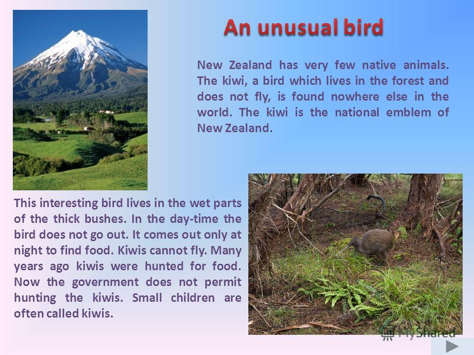 This interesting bird lives in the wet parts of the thick bushes. In the day-time the bird does not go out. It comes out only at night to find food. Kiwis cannot fly. Many years ago kiwis were hunted for food. Now the government does not permit hunti