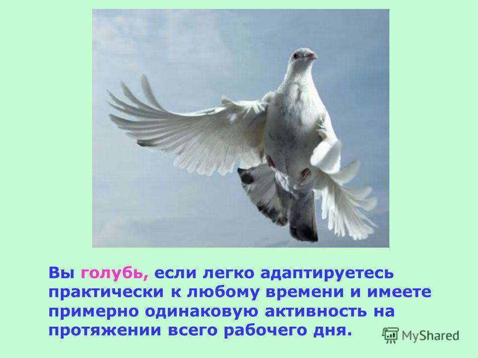 Вы голубь, если легко адаптируетесь практически к любому времени и имеете примерно одинаковую активность на протяжении всего рабочего дня.