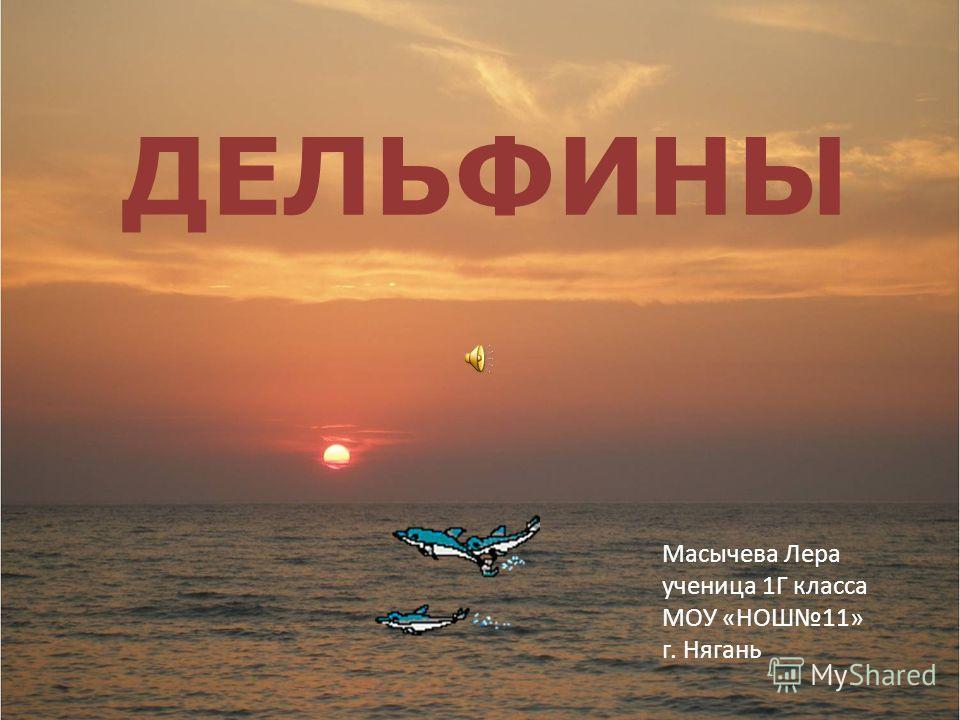 ДЕЛЬФИНЫ Масычева Лера ученица 1Г класса МОУ «НОШ11» г. Нягань