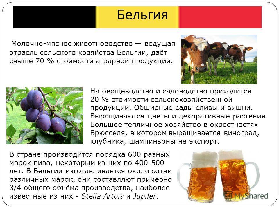 Бельгия Молочно-мясное животноводство ведущая отрасль сельского хозяйства Бельгии, даёт свыше 70 % стоимости аграрной продукции. В стране производится порядка 600 разных марок пива, некоторым из них по 400-500 лет. В Бельгии изготавливается около сот