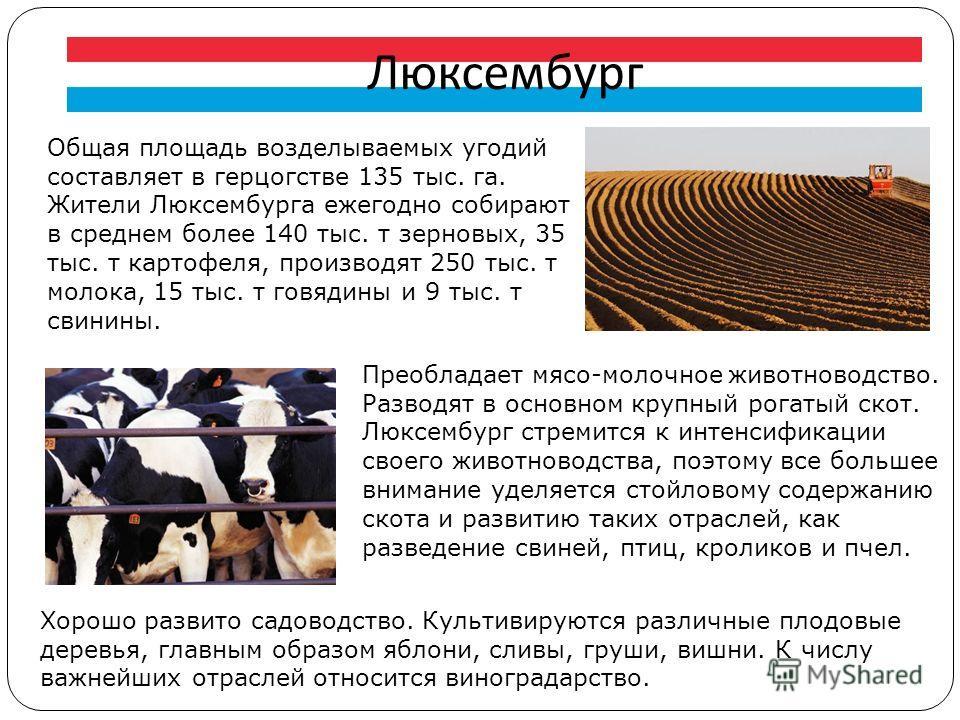 Люксембург Общая площадь возделываемых угодий составляет в герцогстве 135 тыс. га. Жители Люксембурга ежегодно собирают в среднем более 140 тыс. т зерновых, 35 тыс. т картофеля, производят 250 тыс. т молока, 15 тыс. т говядины и 9 тыс. т свинины. Пре