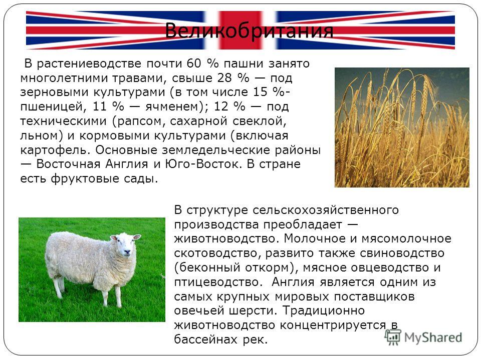 Великобритания В структуре сельскохозяйственного производства преобладает животноводство. Молочное и мясомолочное скотоводство, развито также свиноводство (беконный откорм), мясное овцеводство и птицеводство. Англия является одним из самых крупных ми