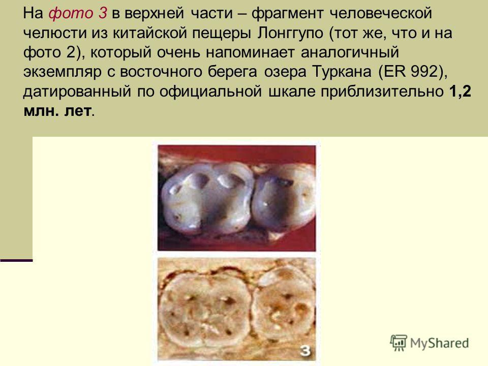 На фото 3 в верхней части – фрагмент человеческой челюсти из китайской пещеры Лонггупо (тот же, что и на фото 2), который очень напоминает аналогичный экземпляр с восточного берега озера Туркана (ER 992), датированный по официальной шкале приблизител
