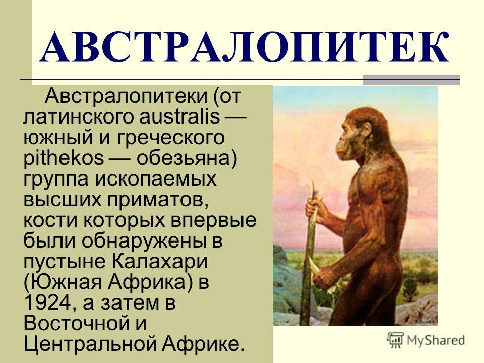 АВСТРАЛОПИТЕК Австралопитеки (от латинского australis южный и греческого pithеkos обезьяна) группа ископаемых высших приматов, кости которых впервые были обнаружены в пустыне Калахари (Южная Африка) в 1924, а затем в Восточной и Центральной Африке.