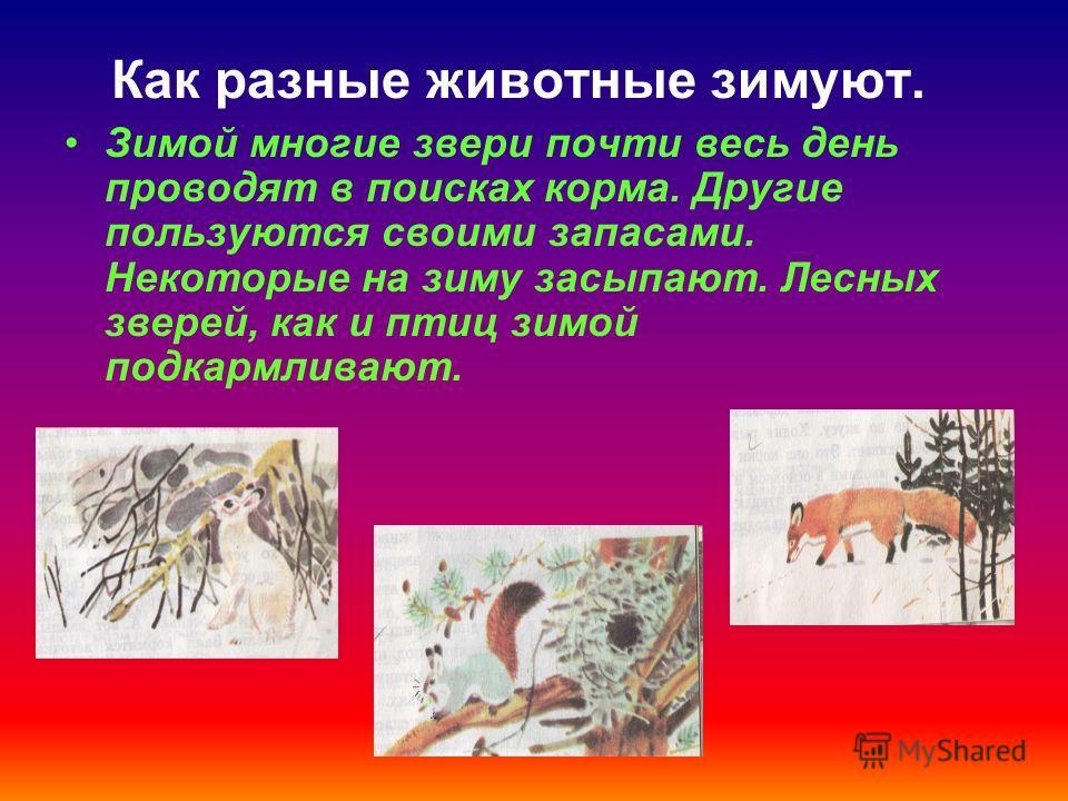 Как разные животные зимуют. Зимой многие звери почти весь день проводят в поисках корма. Другие пользуются своими запасами. Некоторые на зиму засыпают. Лесных зверей, как и птиц зимой подкармливают.
