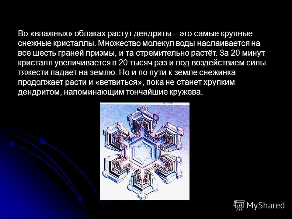 Во «влажных» облаках растут дендриты – это самые крупные снежные кристаллы. Множество молекул воды наслаивается на все шесть граней призмы, и та стремительно растёт. За 20 минут кристалл увеличивается в 20 тысяч раз и под воздействием силы тяжести па