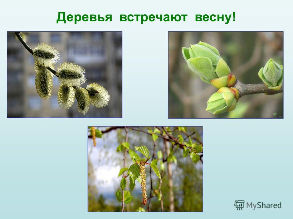Деревья встречают весну!