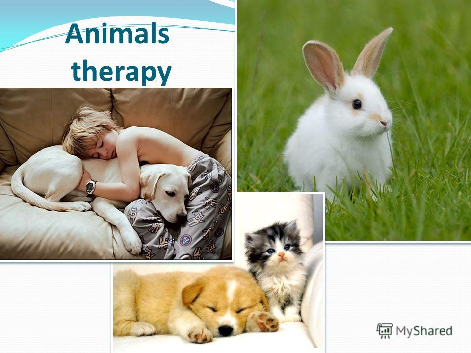 Animals therapy
