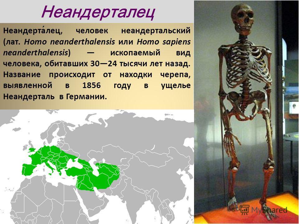 Неандерта́лец, человек неандертальский (лат. Homo neanderthalensis или Homo sapiens neanderthalensis) ископаемый вид человека, обитавших 3024 тысячи лет назад. Название происходит от находки черепа, выявленной в 1856 году в ущелье Неандерталь в Герма
