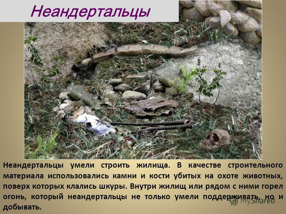 Неандертальцы умели строить жилища. В качестве строительного материала использовались камни и кости убитых на охоте животных, поверх которых клались шкуры. Внутри жилищ или рядом с ними горел огонь, который неандертальцы не только умели поддерживать,
