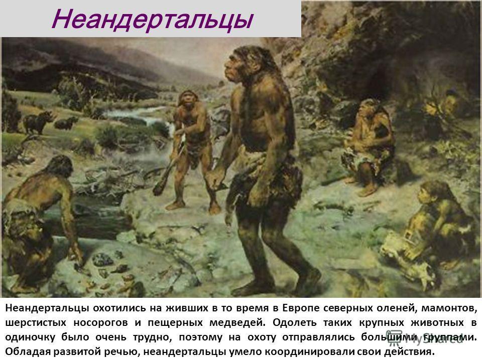 Неандертальцы охотились на живших в то время в Европе северных оленей, мамонтов, шерстистых носорогов и пещерных медведей. Одолеть таких крупных животных в одиночку было очень трудно, поэтому на охоту отправлялись большими группами. Обладая развитой