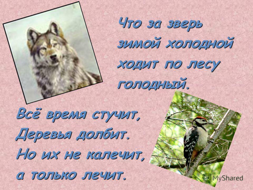 Что за зверь зимой холодной ходит по лесу голодный. Всё время стучит, Деревья долбит. Но их не калечит, а только лечит.