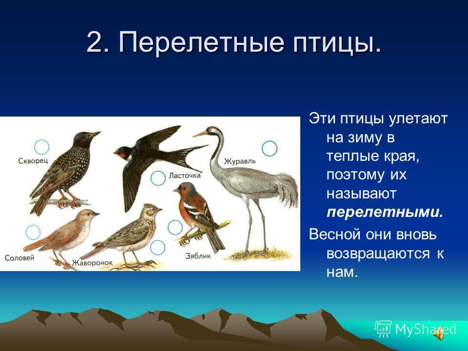 2. Перелетные птицы. Эти птицы улетают на зиму в теплые края, поэтому их называют перелетными. Весной они вновь возвращаются к нам.