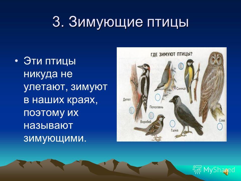 3. Зимующие птицы Эти птицы никуда не улетают, зимуют в наших краях, поэтому их называют зимующими.