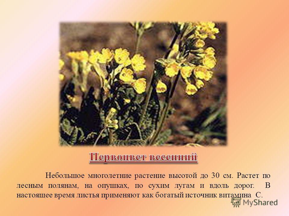 Небольшое многолетние растение высотой до 30 см. Растет по лесным полянам, на опушках, по сухим лугам и вдоль дорог. В настоящее время листья применяют как богатый источник витамина С.