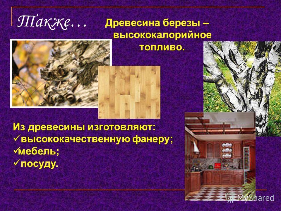Также… Древесина березы – высококалорийное топливо. Из древесины изготовляют: высококачественную фанеру; мебель; посуду.