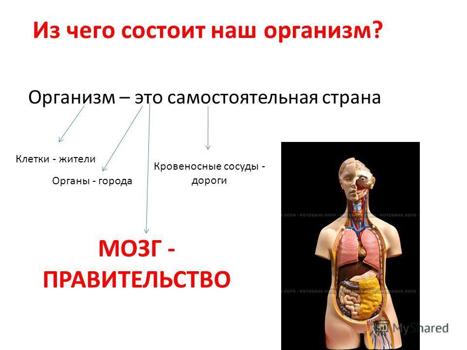 Из чего состоит наш организм? Организм – это самостоятельная страна Клетки - жители Органы - города Кровеносные сосуды - дороги МОЗГ - ПРАВИТЕЛЬСТВО