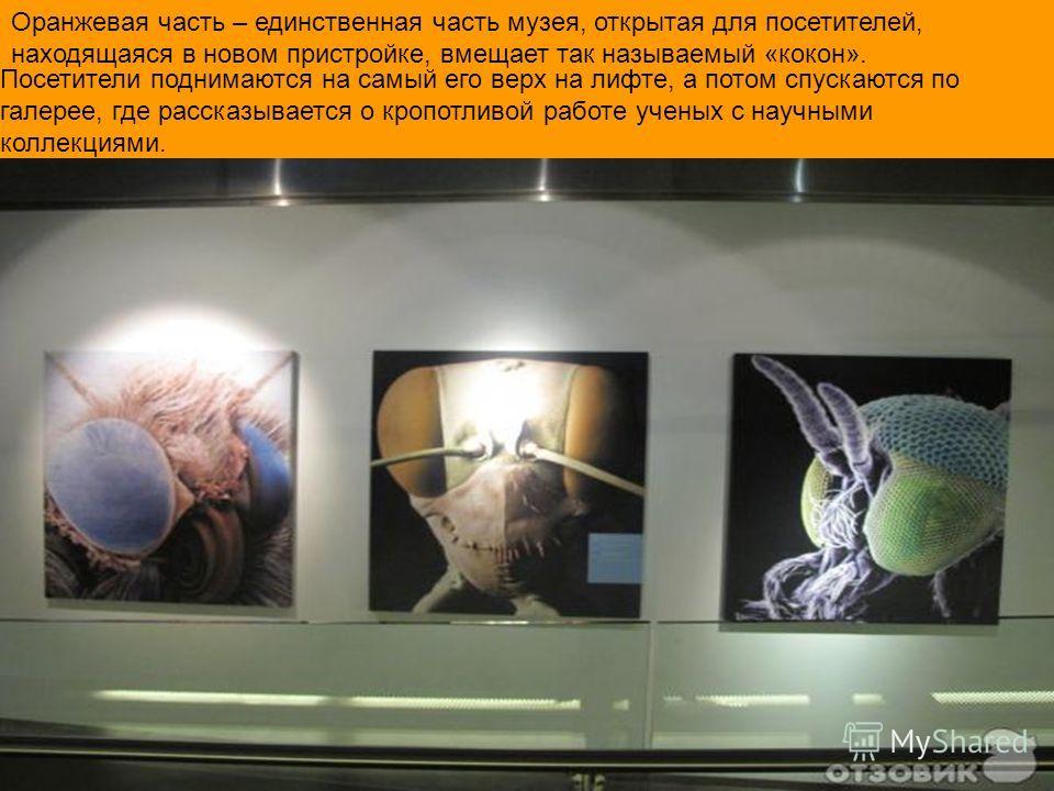 Оранжевая часть – единственная часть музея, открытая для посетителей, находящаяся в новом пристройке, вмещает так называемый «кокон». Посетители поднимаются на самый его верх на лифте, а потом спускаются по галерее, где рассказывается о кропотливой р
