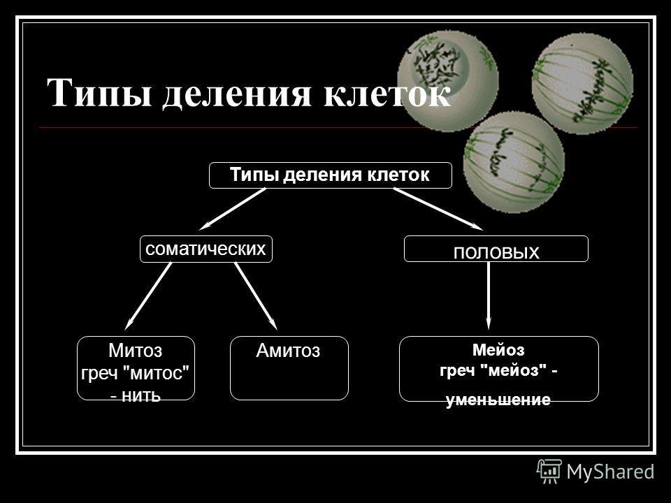 Типы деления клеток соматических половых Мейоз греч мейоз - уменьшение Мейоз греч мейоз - уменьшение Амитоз Митоз греч митос - нить Митоз греч митос - нить