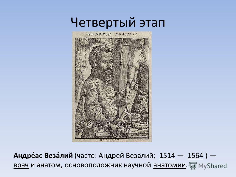 Четвертый этап Андре́ас Веза́лий (часто: Андрей Везалий; 1514 1564 ) врач и анатом, основоположник научной анатомии.