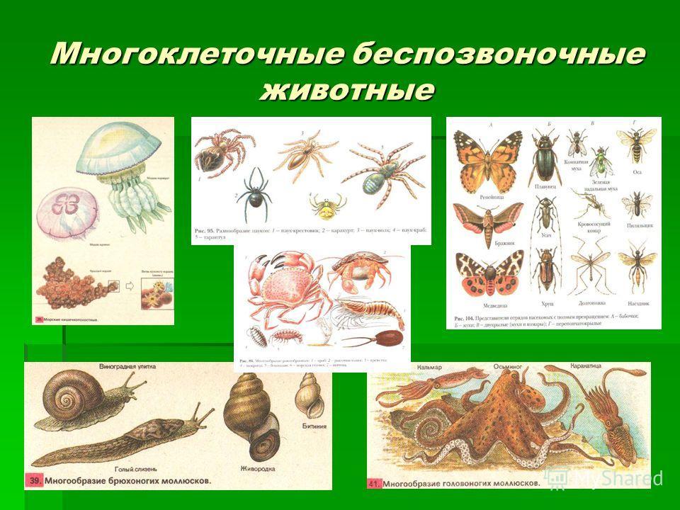 Многоклеточные беспозвоночные животные