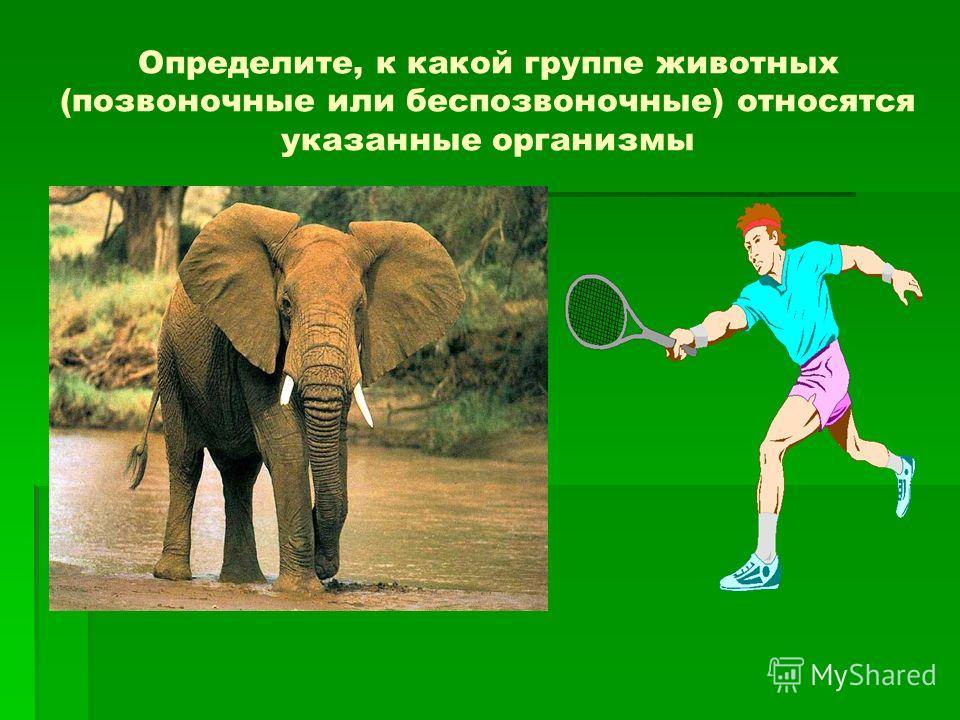 Определите, к какой группе животных (позвоночные или беспозвоночные) относятся указанные организмы