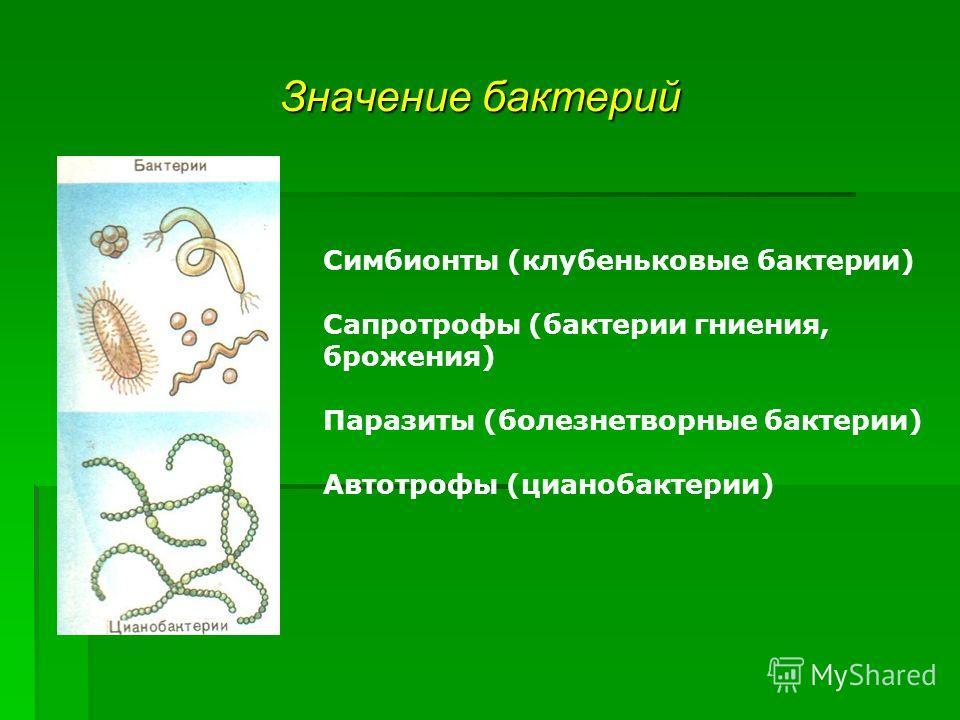 Значение бактерий Симбионты (клубеньковые бактерии) Сапротрофы (бактерии гниения, брожения) Паразиты (болезнетворные бактерии) Автотрофы (цианобактерии)