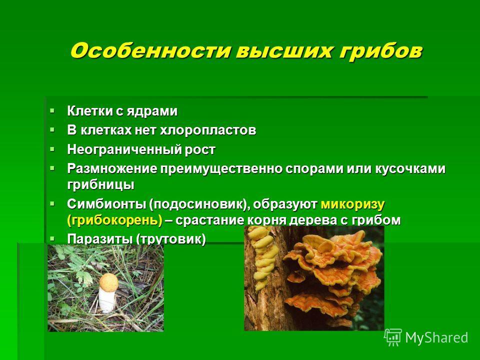Особенности высших грибов Клетки с ядрами Клетки с ядрами В клетках нет хлоропластов В клетках нет хлоропластов Неограниченный рост Неограниченный рост Размножение преимущественно спорами или кусочками грибницы Размножение преимущественно спорами или